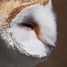 Barn Owl by mwfoster