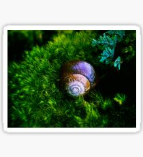 SNAIL IN THE FOREST Sticker