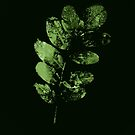 Dark Fir Green Enchantress by Ka L-O-K   Graphic Arts