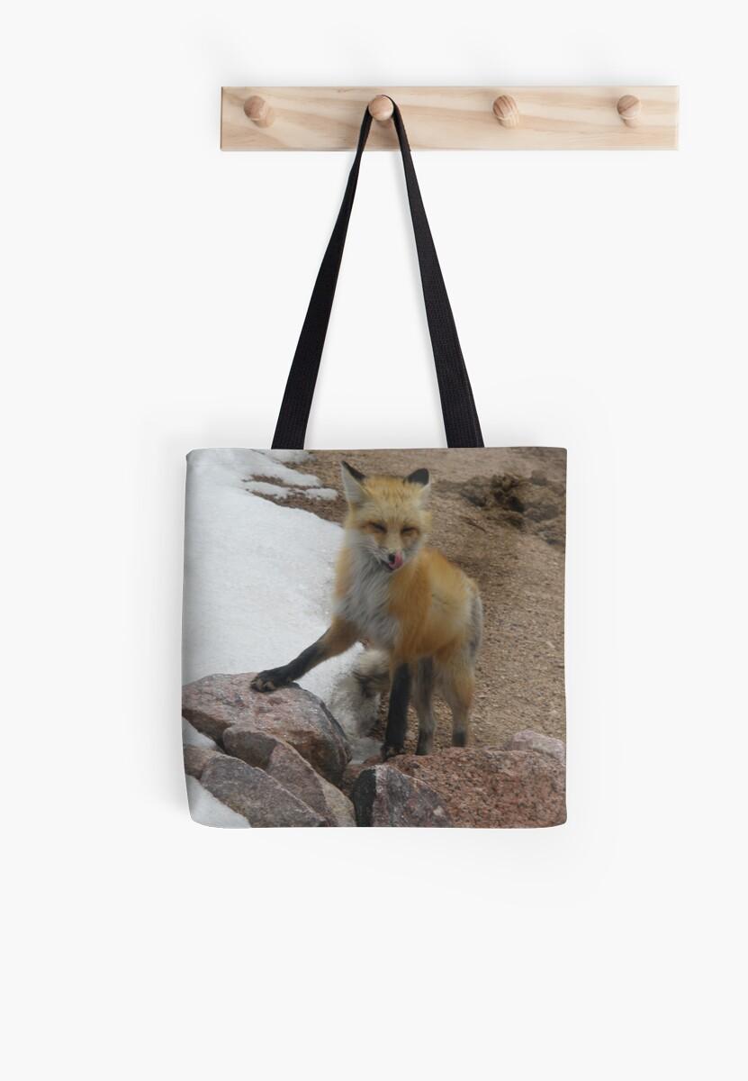 Fox at 11000 feet Pikes Peak by Anthea  Slade