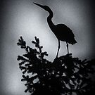Heron in a tree. by toby snelgrove  IPA