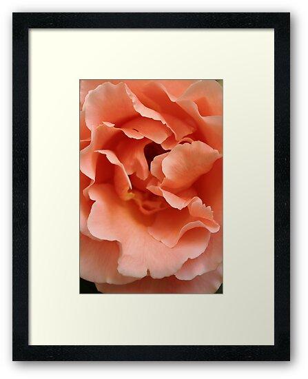 Rose by Jeanne Horak-Druiff