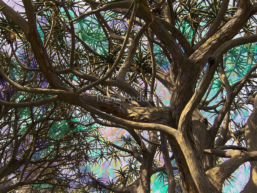 Joyous Sky Through Complex Branches #1 by Ivana Redwine