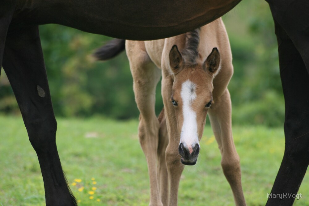 Framed by mom by MaryRVogt