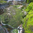 Mossy River by strangers