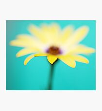 Yellow African Daisy on Brilliant Green Photographic Print