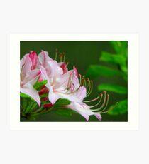 ~Wild Pink Azalea~ Art Print