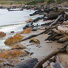 West Coast beach by strangers