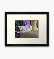 """Casper, The Friendly """"Ghost"""" Kitty Framed Print"""