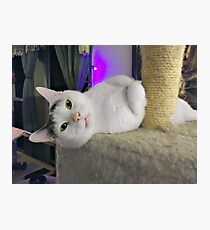 """Casper, The Friendly """"Ghost"""" Kitty Photographic Print"""