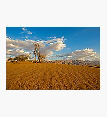 Dead Acacia tree in the Aravah Desert, Israel Photographic Print