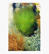 Sea Shrubs Photographic Print