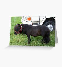 Tiny Tim .. the shetland pony Greeting Card