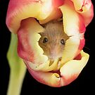 Harvest Mouse In A Tulip Flower By Miles Herbert by Miles Herbert