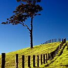 Queensland Winter Colours by Garry Schlatter