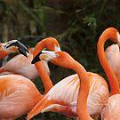 Flamingo Conversation by Colleen Drew