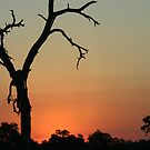 African Sunset by Debbie Schiff