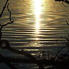 Lakeside Water at Sunset by Charmaine Bailey