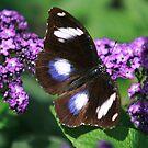 Purple Beauty by Cheri Bouvier-Johnson