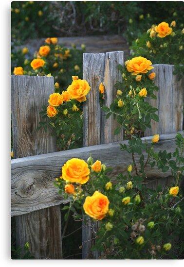 Renegade Roses by Arla M. Ruggles