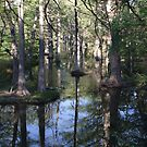 """Spring Rains Cypress Creek"" by Rob Pitzer  by Rob Pitzer"