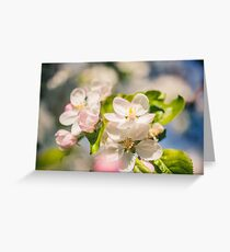 Apple blossoms over blurred nature background Greeting Card