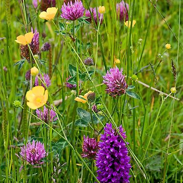 English Wild Flower Meadow by Violaman