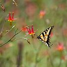 Swallowtail in Scarlet Dream by Susan Gary