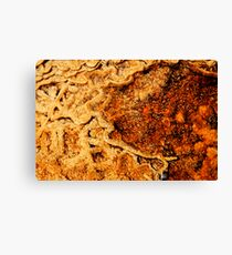 Water maps Canvas Print