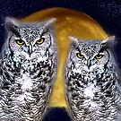 Owls at Night by Nicole Kiefer