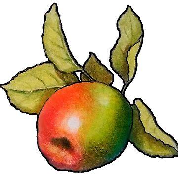 Single Apple, Colour Pencil Art by Joyce