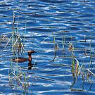 Slavonian Grebe in the Reeds by kernuak