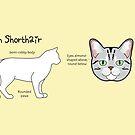 American Shorthair mug by Joumana Medlej