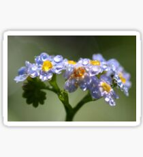 Forget-Me-Not with Tears Sticker