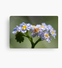 Forget-Me-Not with Tears Metal Print