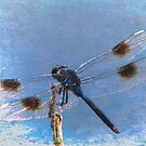Dragonfly by Noble Upchurch