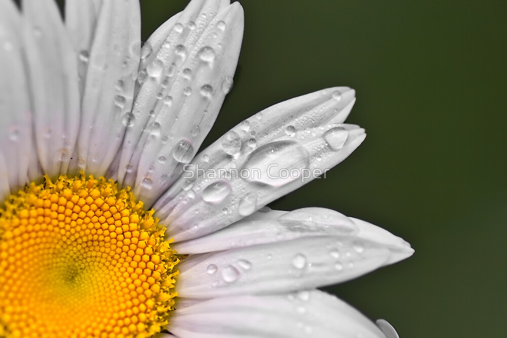 Daisy by Shannon Beauford