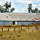 Trinkey Station - Gunnedah Region NSW by Bev Woodman