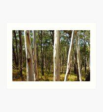 Summer gums - Sinclair's Gully, Norton Summit, Adelaide Hills Art Print