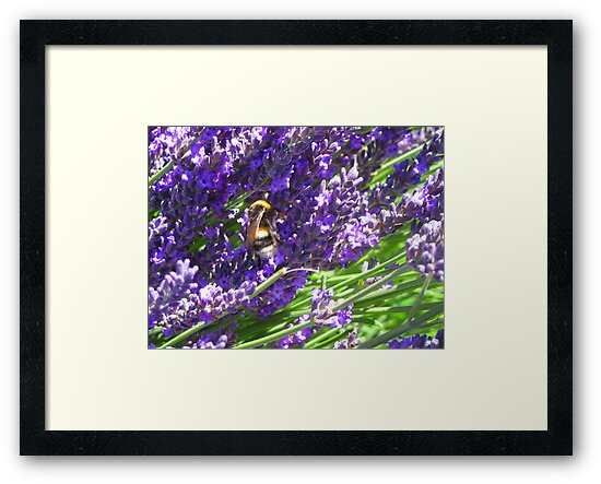 Bumble Lavendar by Tanisha Jowsey