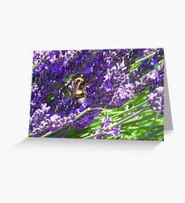 Bumble Lavendar Greeting Card