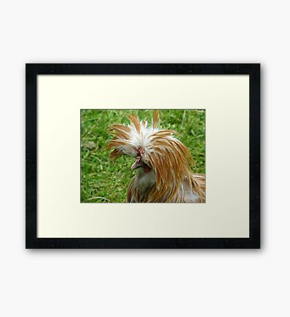 A Chicken With Panache Framed Print