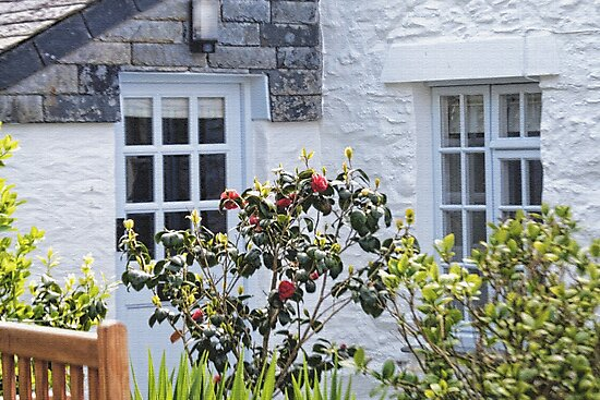 Mousehole Cottage Windows by lynn carter