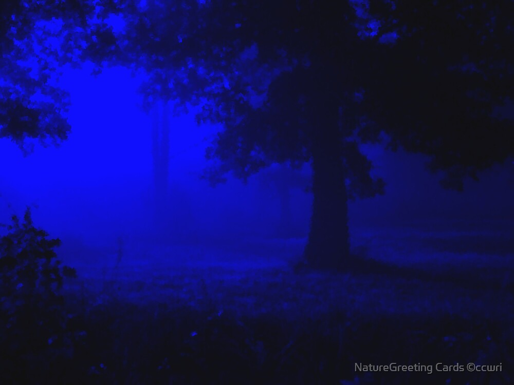 ~Midnight Serenade~ by NatureGreeting Cards ©ccwri