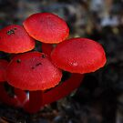 Reds - well what else do you call them by Steve Axford