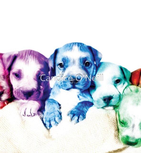 Puppy Pop Art by Candice O'Neill
