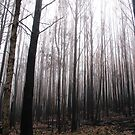 Burnt trees surrounded in fog. by Charlotte Parker