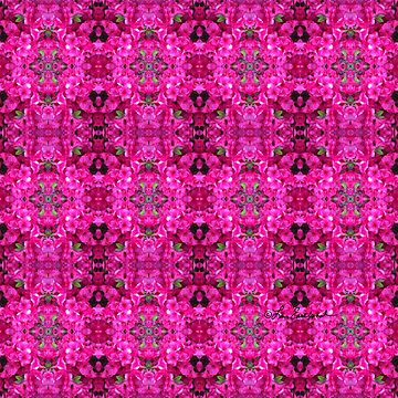 Pink Floral Abstract by loeye