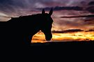 SIlhouetted Mare by Candice O'Neill