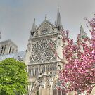 Cherry Blossom Notre Dame by Michael Matthews